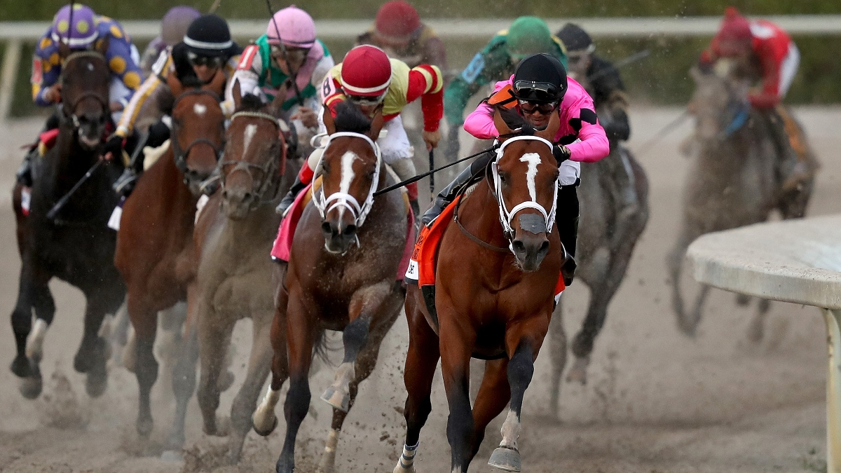 Singapore Pools Horse Racing Odds